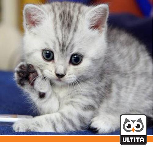 فلش مموری پنجه گربه Cat Paw